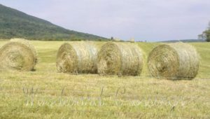 Use Round Hay Bales in the Woodward Crossings' Hay Bale Feeder Basket