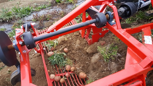 Edible Earth's DM100 Delmorino Side Discharge Potato Digger